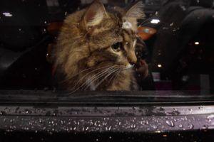 transport żywych zwierząt