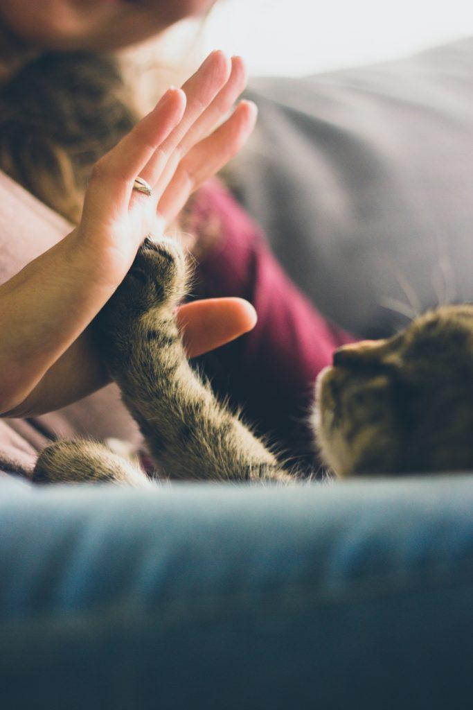 zooterapia felinoterapia