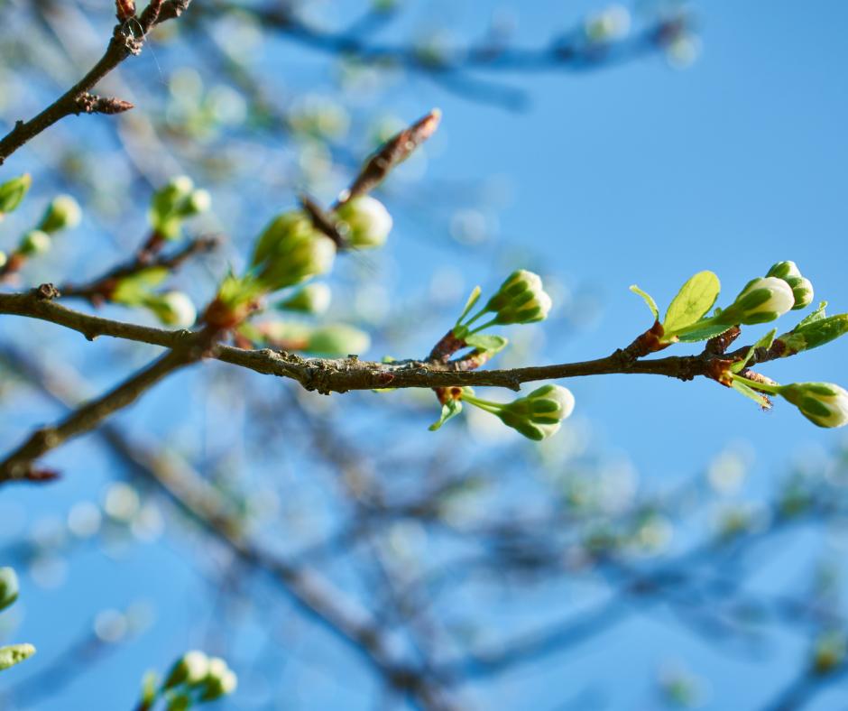 Przesilenie wiosenne